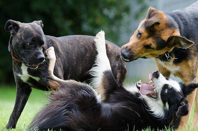 Welche Hunderasse?