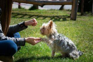 Hundetraining Yorkshire