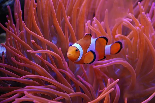 Aquarium Tierfreundeblog
