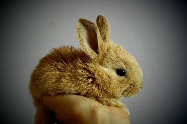 Sind Kaninchen Nagetiere