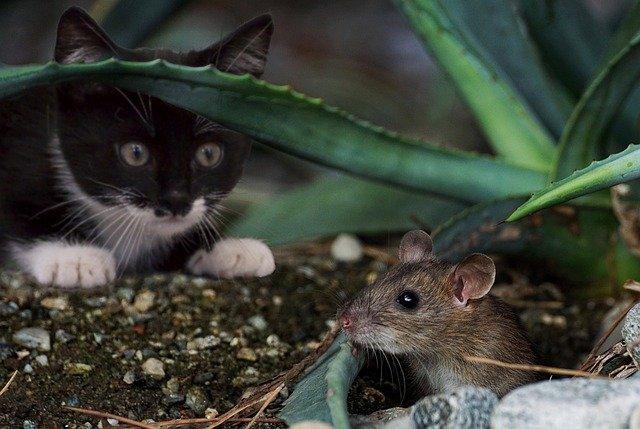 Nagetiere im Garten bestimmen - Tierfreundeblog